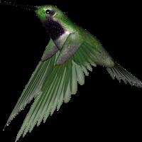 Hummingbird PNG Clipart